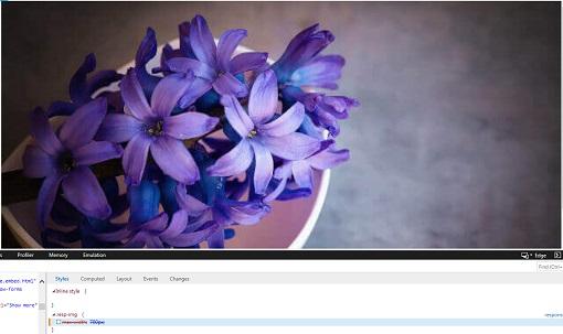 flowers_full_width (46K)